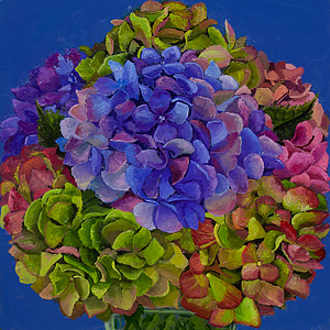 Marion Dioguardi, Everlasting Hydrangea #3